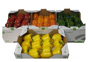 Pepper red, green and yellow