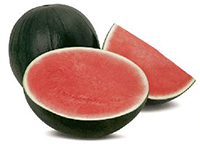 Fashion seedless watermelon