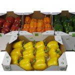 Pimientos rojos, verdes y amarillos
