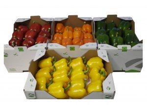 Pimiento rojo, verde y amarillo ecológico