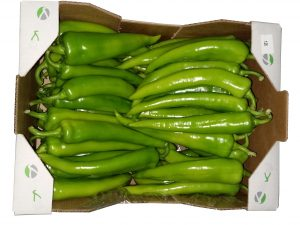 Chilli green capsicum
